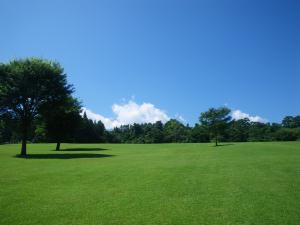 パインズパークの芝生