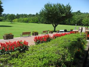 とにかくパインズパークの芝生は綺麗