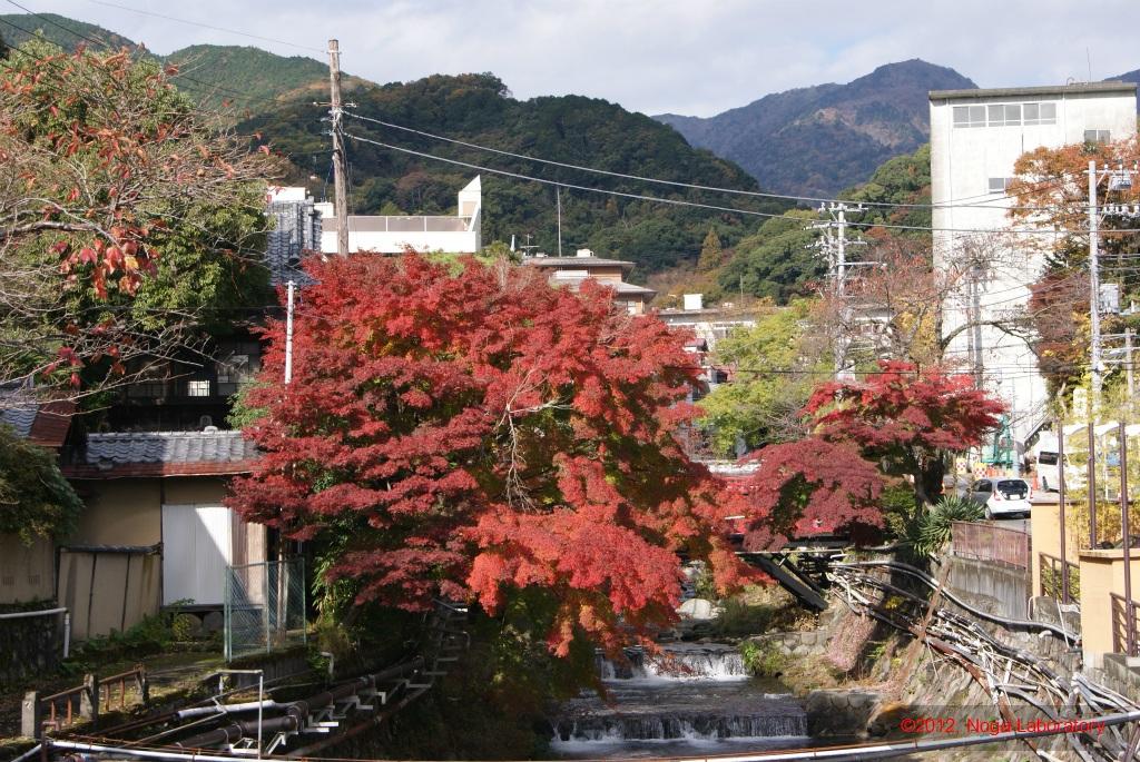 川べりから紅葉