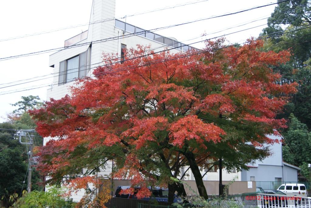 まだ紅葉があります